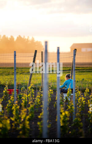 Schweden, Ostergotland, Reife Frau, die Arbeiten im Weinberg - Stockfoto