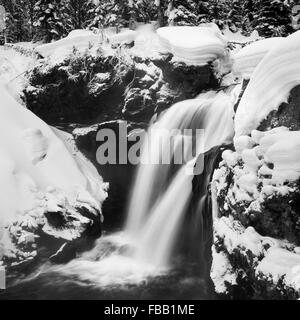 Winter umgibt Elch fällt im Yellowstone-Nationalpark, Wyoming. - Stockfoto