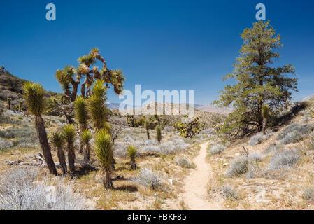 Panorama-Rundwanderung im Joshua Tree National Park - Stockfoto