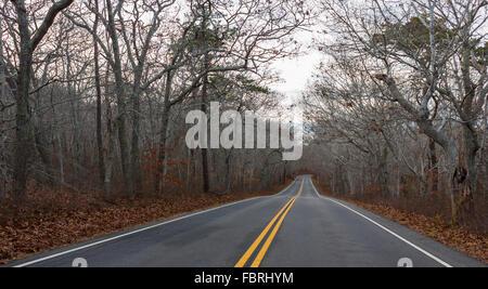 Landstraße mit bemalten doppelte gelbe Linien führt durch einen Wald von kahlen Bäumen in Cape Cod, Massachusetts - Stockfoto
