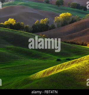 Schöne Frühlingslandschaft gepflanzt Felder in der Toskana. Val d ' Orcia in Italien