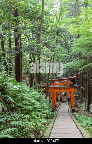 Fushimi Inari-Taisha, Shinto-Schrein, vermilion Torii Toren Linie Pfade im Wald Wald am Mount Inari, Kyoto, Japan, - Stockfoto