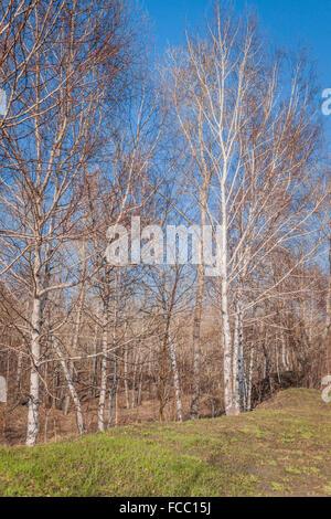 Sonniger Herbst Bäume im Wald - Stockfoto