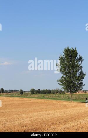 Einsamer Baum im Feld - Stockfoto