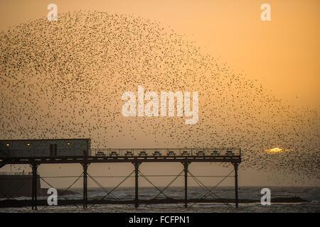 Aberystwyth Wales UK, Freitag, 22. Januar 2016 Tausende Stare in den Himmel nehmen über Aberystwyth Pier bei Sonnenuntergang, - Stockfoto
