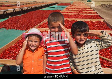 Drei Kinder Grüßen an Pfeffer trocknen Gegend, Südost-Anatolien, Türkei - Stockfoto