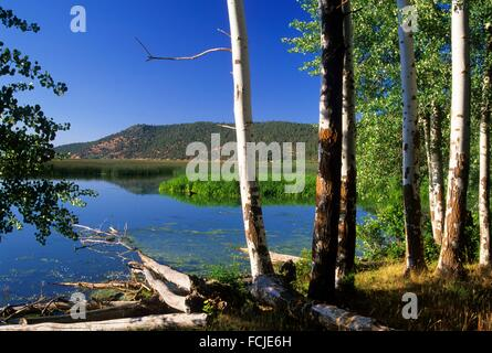 Aspen auf Shoalwater Bay Marsh, Klamath Wildlife Area, Oregon. - Stockfoto