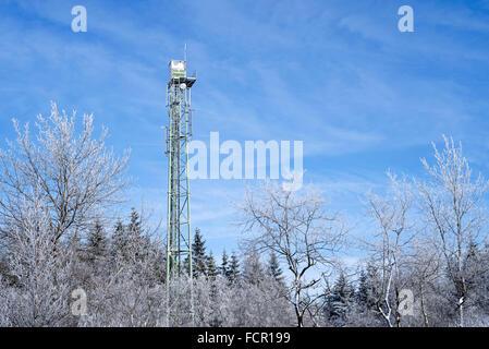 Bäume mit Raureif bedeckt im Winter und im Wald Feuer Wachturm am hohen Venn / Hautes Fagnes, Nature reserve in - Stockfoto