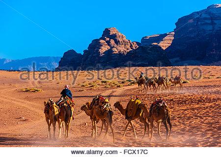 Beduinen-Männer und ihre Kamele, Arabische Wüste, Wadi Rum, Jordanien. - Stockfoto