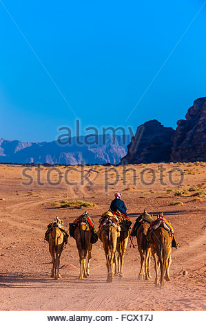 Beduinen-Mann und seine Kamele, Arabische Wüste, Wadi Rum, Jordanien. - Stockfoto