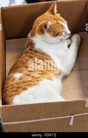 eine katze schlafen in einem karton drau en in einem garten stockfoto bild 38163427 alamy. Black Bedroom Furniture Sets. Home Design Ideas