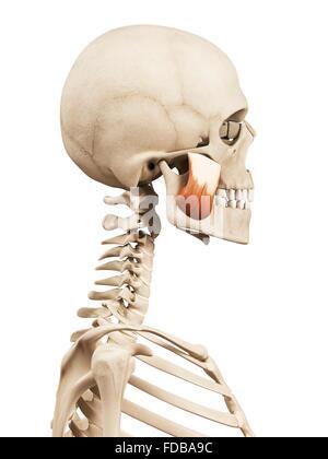 Superior view der menschlichen Schädel Anatomie mit Anmerkungen ...