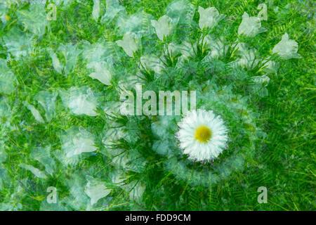 Blumengarten - Stockfoto
