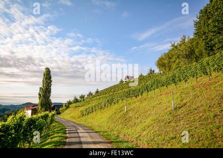 Weinberge an der South Steirische Weinstraße im Herbst, Österreich Europa - Stockfoto