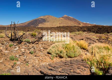 Vulkanlandschaft im Teide Nationalpark auf Teneriffa, Kanarische Inseln, Spanien. Fotografiert an einem sonnigen - Stockfoto