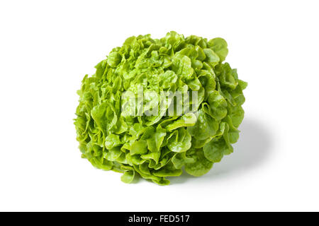 Frische grüne Eichblattsalat auf weißem Hintergrund - Stockfoto