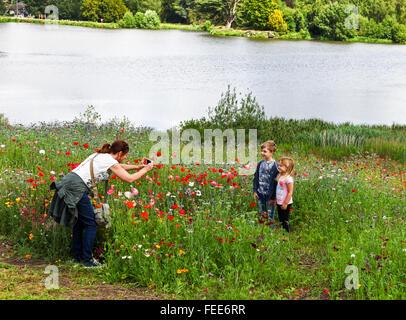 Eine Mutter mit dem Fotografieren von ihrem Sohn und ihrer Tochter in einem Feld von Wildblumen Trentham Gardens - Stockfoto