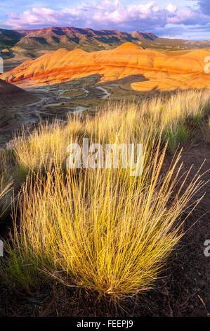 Große Trauben von Rasenfläche den Hang in oberhalb der Painted Hills, und die untergehende Sonne Farben am Himmel. - Stockfoto