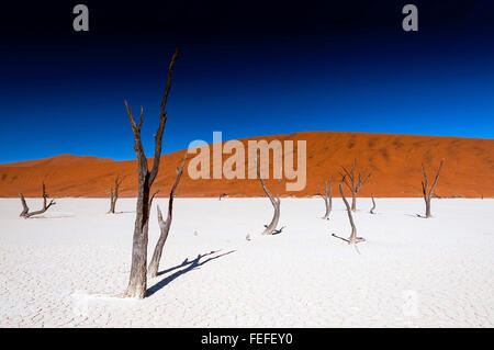 Tot Akazien in Sossusvlei Pfanne, Namibia. Sossusvlei ist ein Salz und Ton Pan, umgeben von hohen roten Dünen