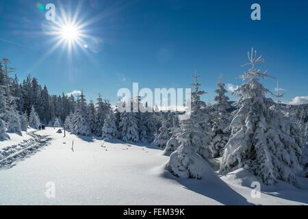 Schneeschuh-Wanderung, Nationalpark Harz, Deutschland - Stockfoto