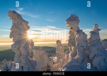 Winter-Landschaft am Brocken, Nationalpark Harz, Deutschland - Stockfoto