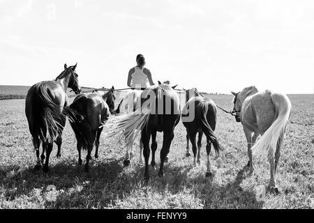 B&W Rückansicht Bild Frau Reiten und führenden sechs Pferde in Feld - Stockfoto