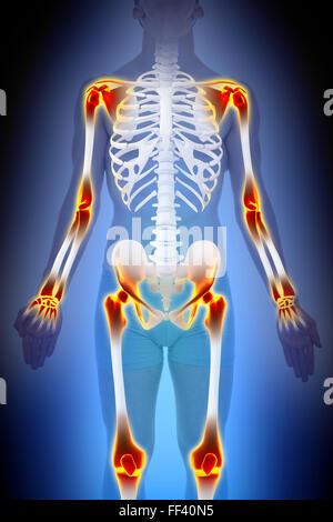 Medizin, Anatomie Skelett / Knochen, Gelenke des menschlichen Arms ...