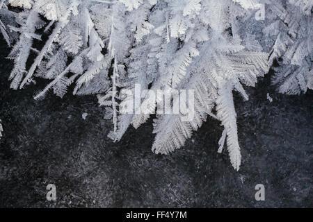 Rauhreif formen Feder-wie Kristalle auf der Eisoberfläche von Patricia Lake im Jasper Nationalpark früh in der sub - Stockfoto
