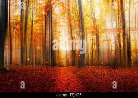 Magische Straße im Herbst Wald mit geheimnisvolle Lichter und schöne Bäume - Stockfoto