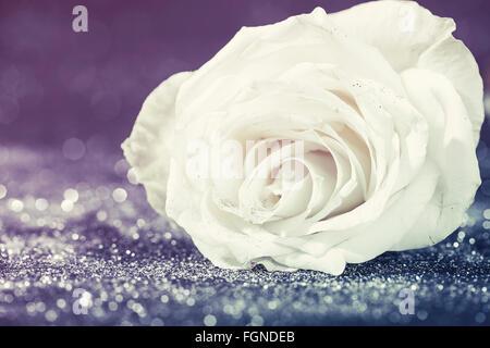 Valentines Hintergrund - rose weiß funkelnde Glitter-Hintergrund - Stockfoto