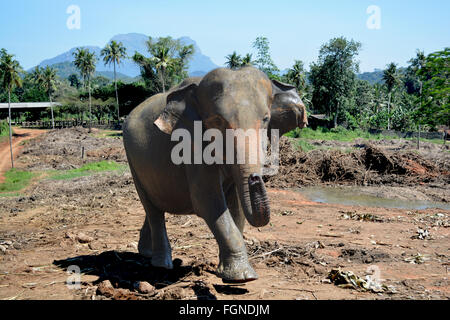 Elefant sagt Hallo - Stockfoto