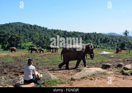beobachten die Elefanten Spaziergang - Stockfoto