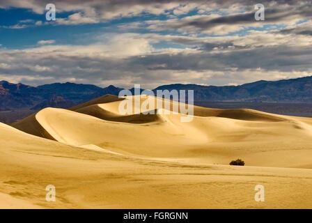 Mesquite flache Sanddünen Amargosa Palette in Ferne bei Sonnenaufgang, Death Valley, Kalifornien, USA - Stockfoto