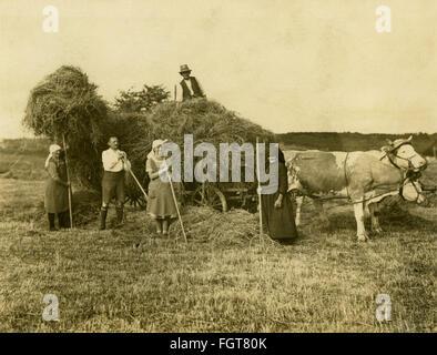 Landwirtschaft, Heuernte, Heuwagen, Spannweite der Rinder, in der Nähe von Nürnberg, Bayern, Deutschland, 1931, - Stockfoto