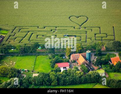 Labyrinth mit Herz im Maisfeld, Maislabyrinth, Herzform, herzförmig, Herten, Ruhrgebiet, Nordrhein-Westfalen - Stockfoto