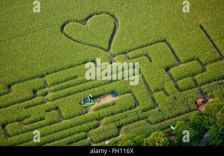 Labyrinth mit Herz im Maisfeld, Maislabyrinth, grünes Herz, Herzform, Herz geformt, Herten, Ruhrgebiet - Stockfoto