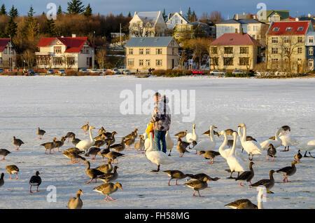 """Lake Tjörnin oder """"Teich"""" Mann füttert Enten und Gänse auf zugefrorenen See im Winter, zentrale Reykjavik, Island. - Stockfoto"""