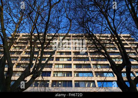 St Thomas' Hospital durch Zweige der Winter Bäume auf der South Bank, Lambeth, London, England, Großbritannien - Stockfoto