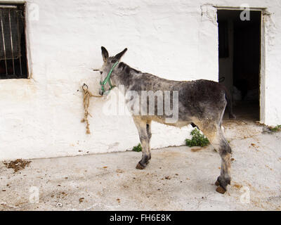 Typische Esel Esel Taxi, weiße Dorf Mijas, Provinz Malaga Costa del Sol Andalusien Südspanien - Stockfoto