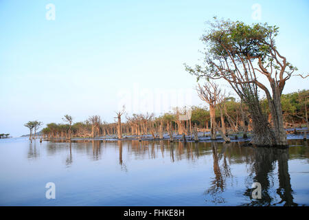 Brasilien, brasilianischen Amazonas, Para, Igapo (Varzea) saisonal überfluteten Wald auf dem Tapajos - Stockfoto