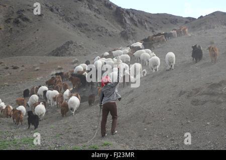 Mongolei Hirte in der Mitte von Nirgendwo mit Tieren - Stockfoto