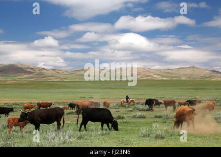Mongolei grüne Landschaft mit Pferden und Kühen - Stockfoto
