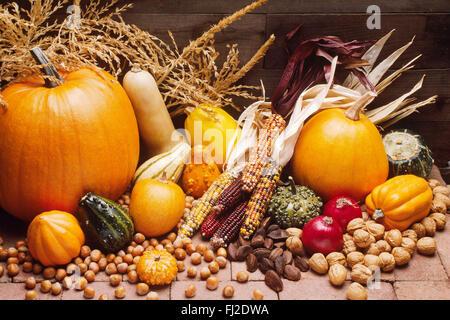 Rückgang der Ernte der Kürbisse, Kürbisse, Zwiebeln, Kürbis, Mais & Nussmischung Stockfoto