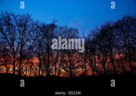 Bäume ohne Blätter im Morgenlicht, Deutschland, Nordrhein-Westfalen - Stockfoto