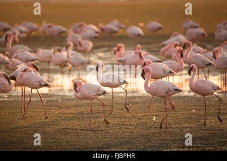Flamingos in der Walfischbucht Feuchtgebiet - Stockfoto