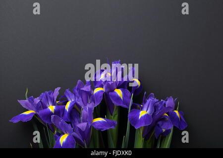 Iris Blumen auf schwarzem Hintergrund, über Kopf - Stockfoto