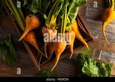 Rohe organische Golden Rüben in einer Box - Stockfoto