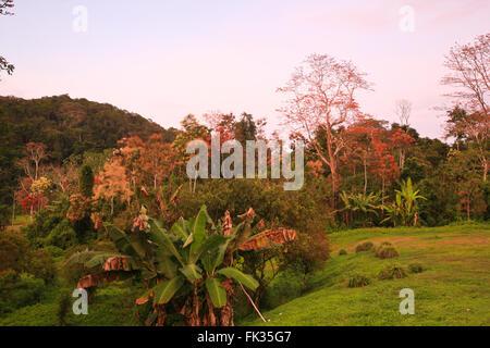 Abend in Cana Field Station im Nationalpark Darien, Republik von Panama. - Stockfoto