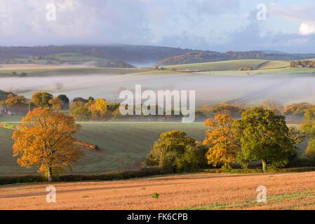Nebligen Morgen über herbstliche Hügellandschaften, Dartmoor, Devon, England, Vereinigtes Königreich, Europa - Stockfoto