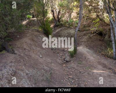 Wanderweg im Laurel und Baum Heide Wald oberhalb von El Tanque, auf Teneriffa, Abfahrt auf trockenen Schlamm Vorsicht - Stockfoto